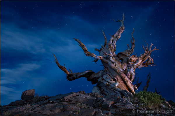 Wicked Witch of the West -  White Mountains, CA by Floris van Bregeul ©