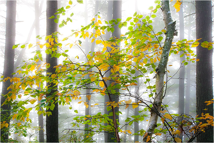 Autumn forest scene in Fog Lake of the Woods region in Northern Ontario by Robert Berdan ©