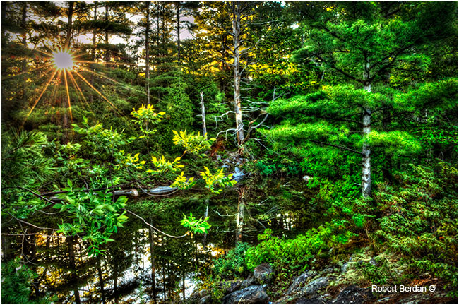 Sunrise in forest near Port Severn Ontario tone mapped by Robert Berdan ©