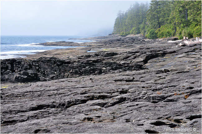 Conglomerate shelf between Sombrio Beach and Paysant Creek  by Janice Saunders ©