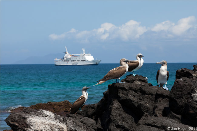 MV Eclipse and Blue-footed Boobies by Jon Huyer ©