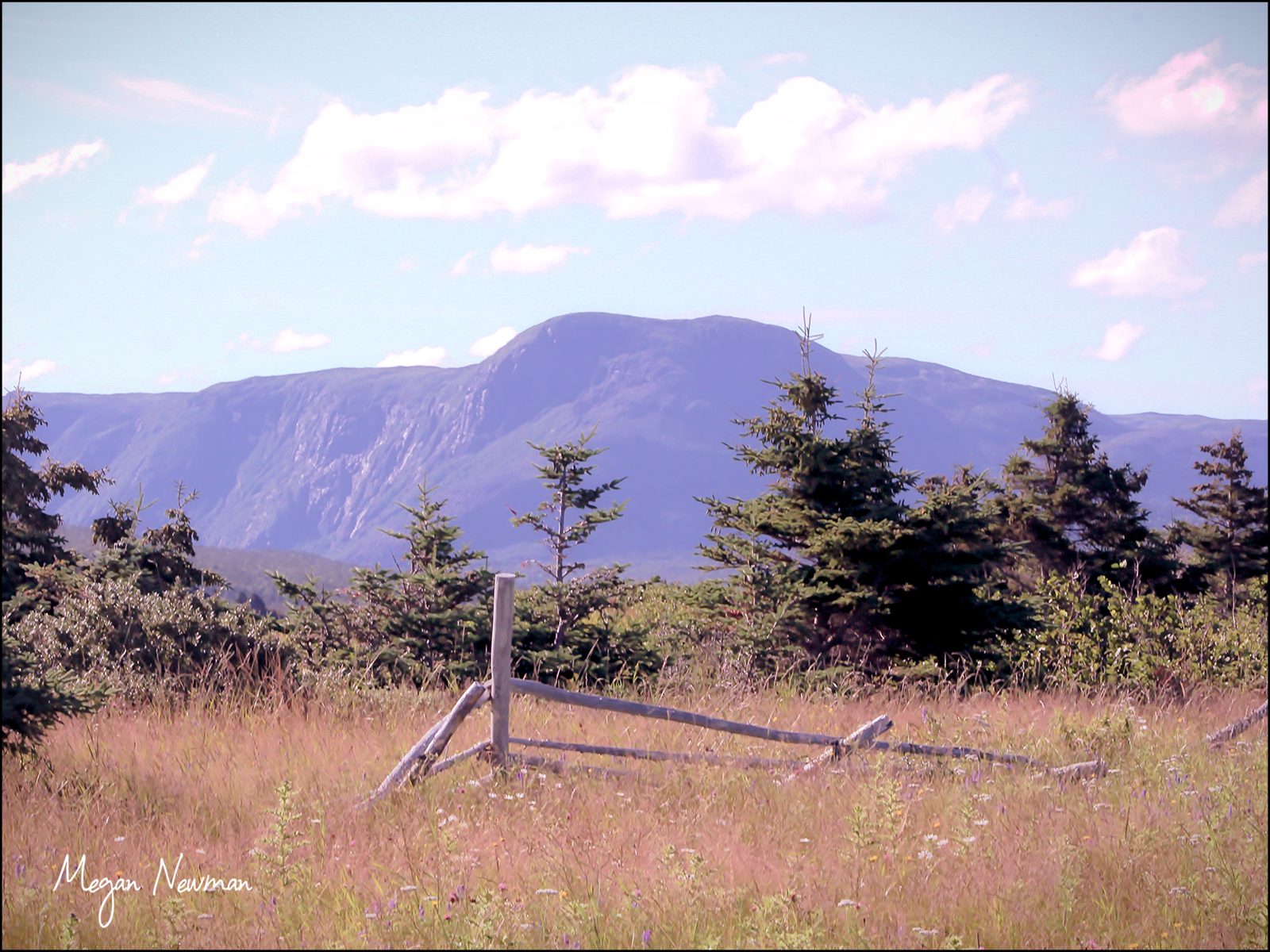 Fence Newfoundland by Megan Newman ©