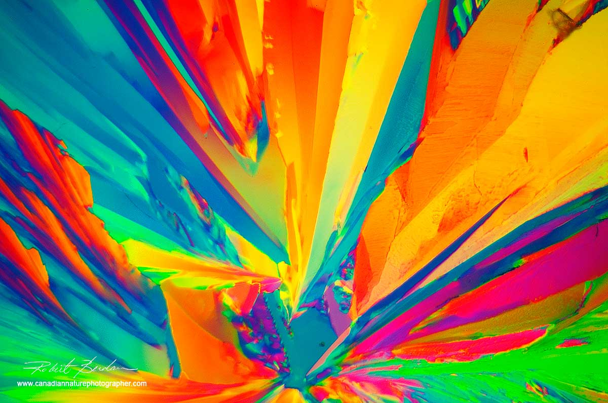 Citric acid crystals by polarized light microscopy Robert Berdan