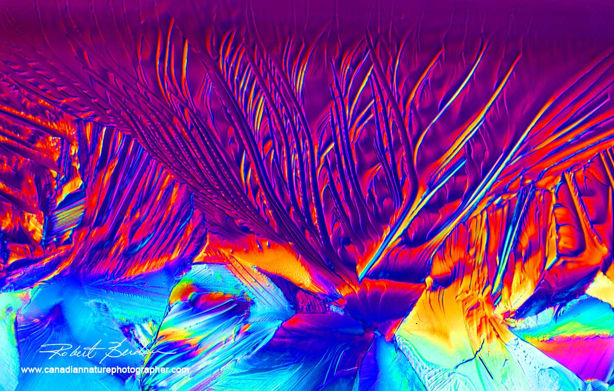 Magnesium sulphate crystals in Polarized light 400X by Robert Berdan ©