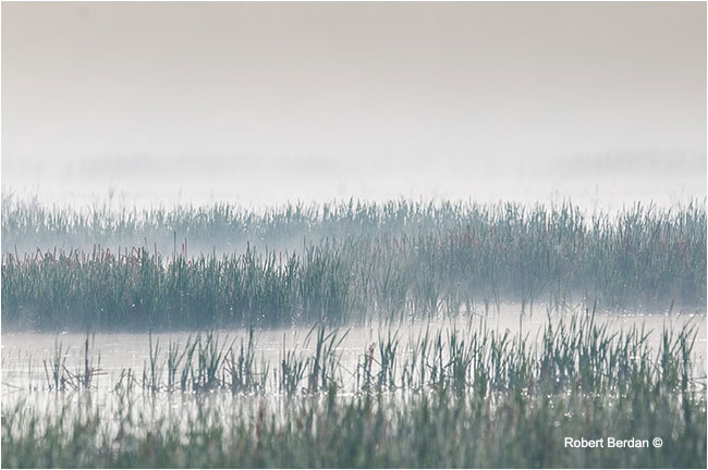 Roadside marsh in fog by Robert Berdan ©