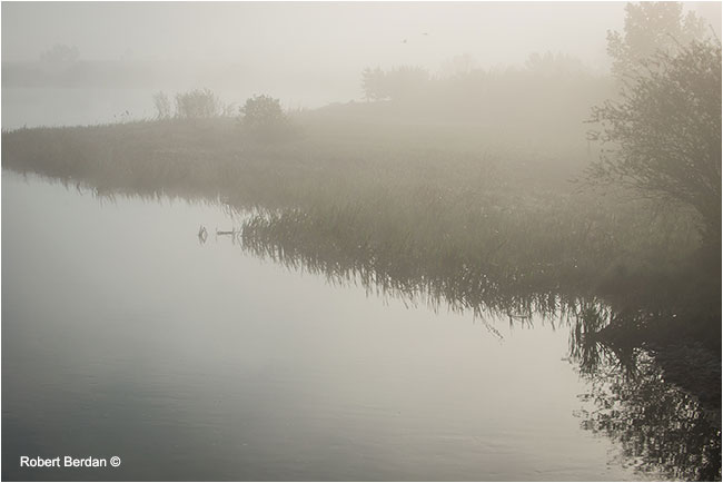 Marsh in fog by Robert Berdan ©