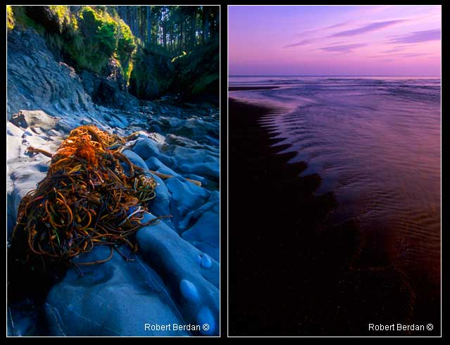 Nootka trail and view of ocean by Robert Berdan ©