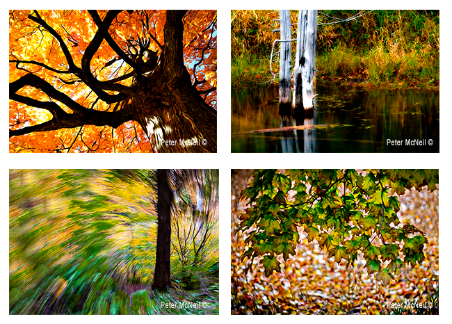Montage of photos by Peter McNeil ©