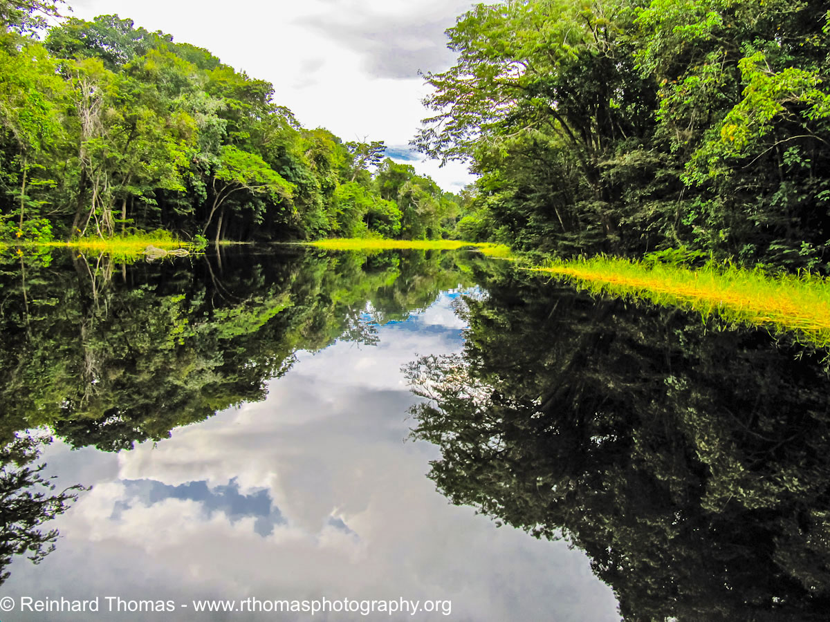 Small quiet side-arm of the Rio Negro by Reinhard Thomas ©