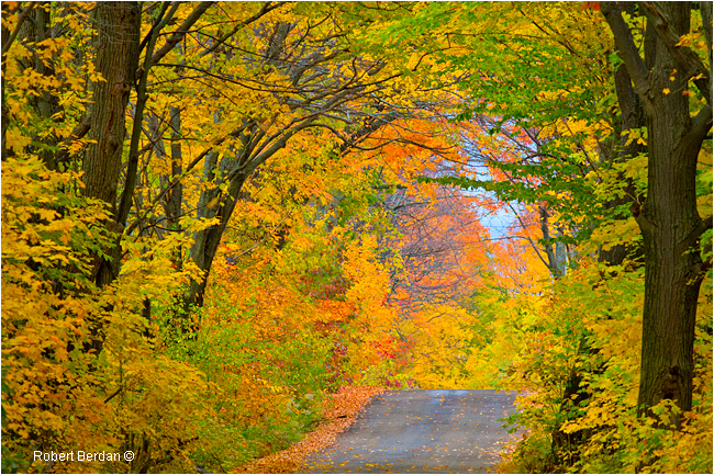 Road to Midland Point in Autumn by Robert Berdan ©