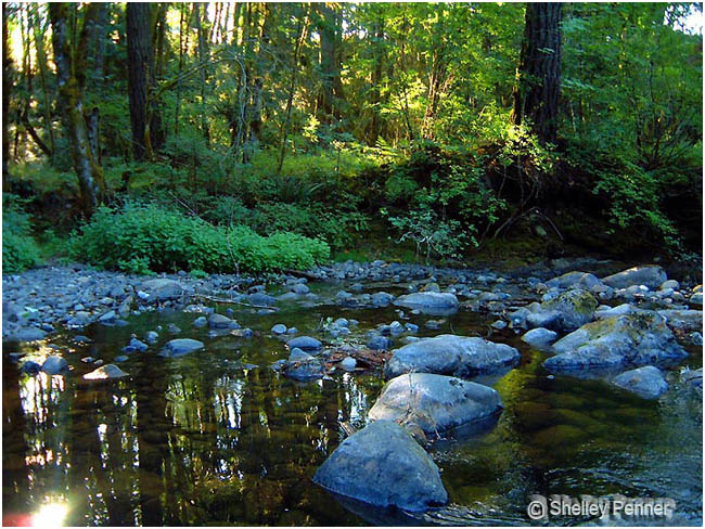 Kitsuksis Creek, Vancouver Island by Shelly Penner ©