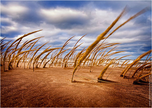 Grass on sand dune by Stephen DesRoches ©