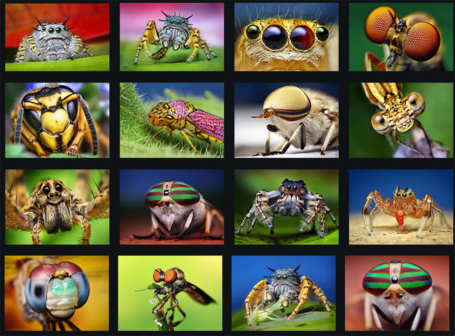 macro photography of insects and spiders by thomas shahan the