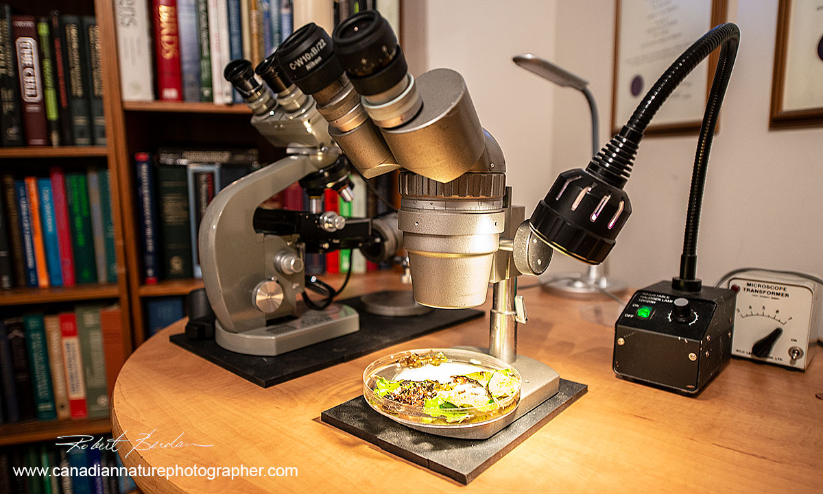 Olympus Zoom Stereo microscope and Olympus E Light microscope by Robert Berdan ©
