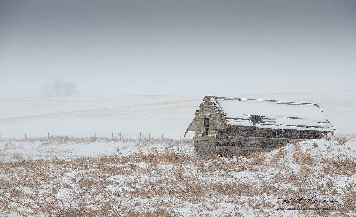 Field and abandoned building in winter by Robert Berdan ©