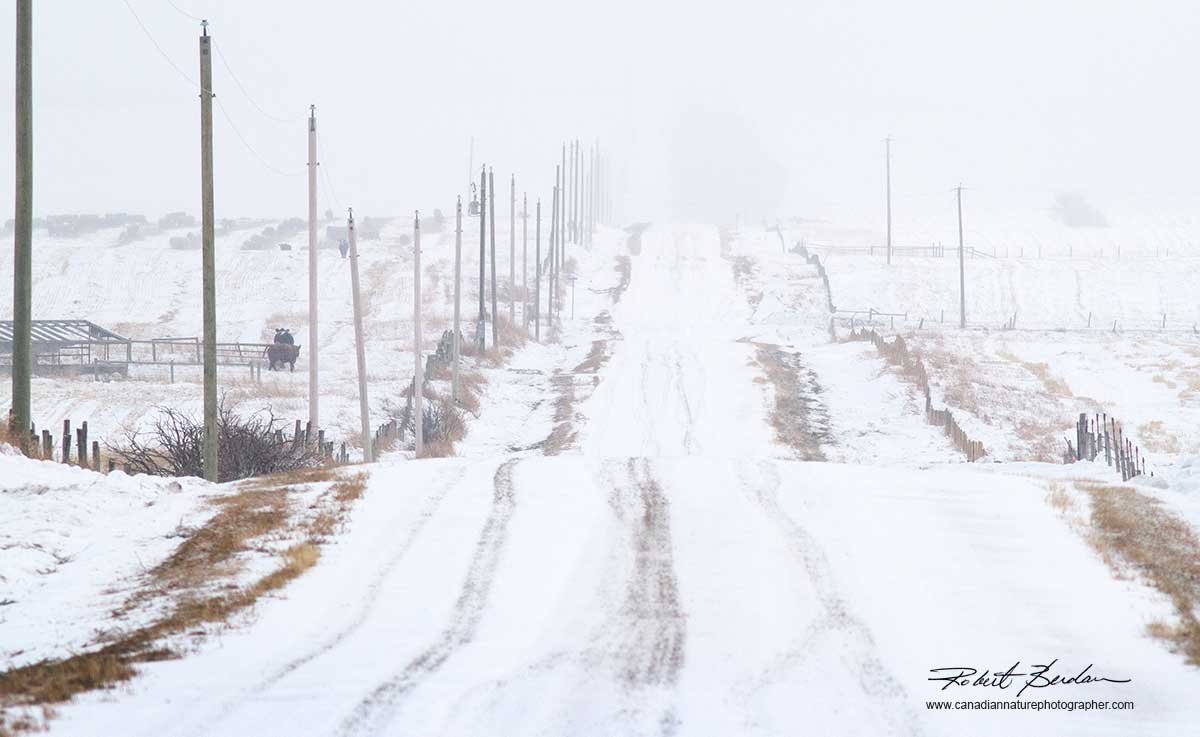 Winter road north of Calgary by Robert Berdan ©