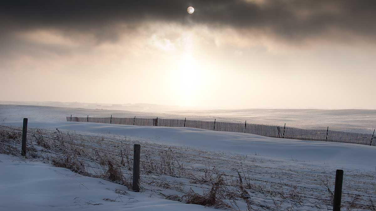 snow fence in wainter scene north of Calgary by Robert Berdan ©