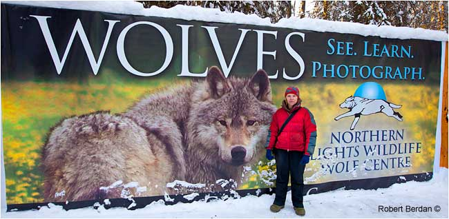 Shelly Black in front of Northern Lights wolf poster by Robert Berdan ©