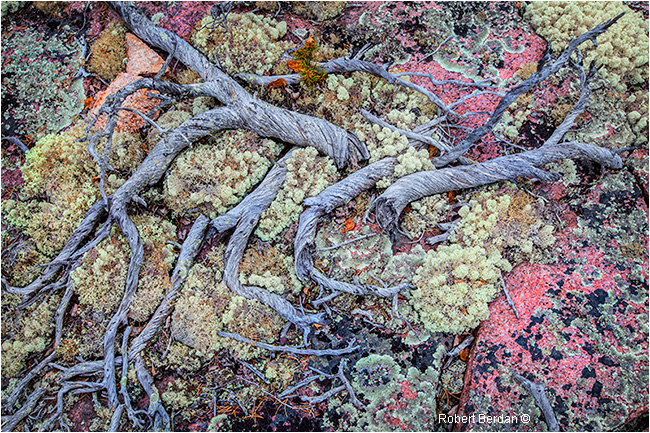Groundscape - branches, mosse and lichen over granite by Robert Berdan ©