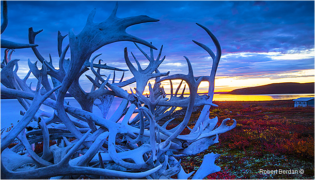 Caribou antlers in front of Point Lake Lodge by Robert Berdan ©
