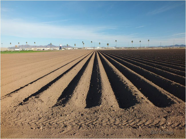 Plouged field in Yuma by Al Meirau ©