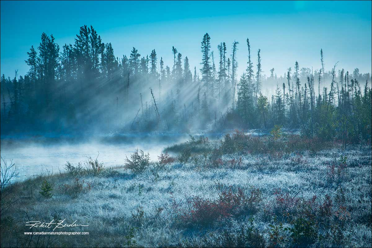 Ealry morning light boreal forest and frost by Robert Berdan ©