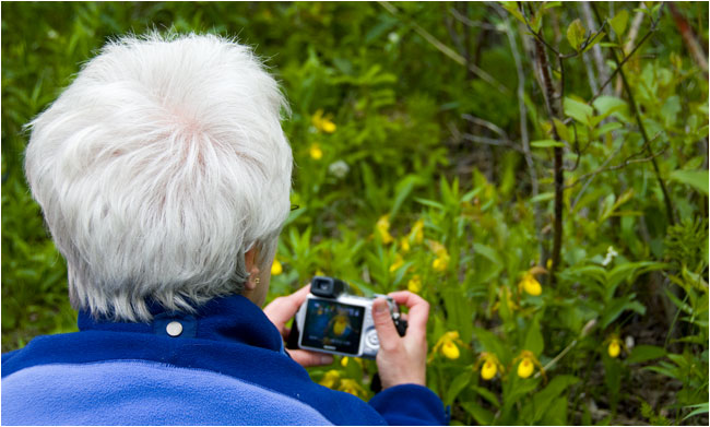 Women photographing Lady slippers using a compact camera by Robert Berdan ©