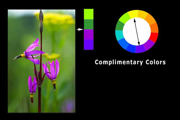 Complimentary color wheel by Robert Berdan ©