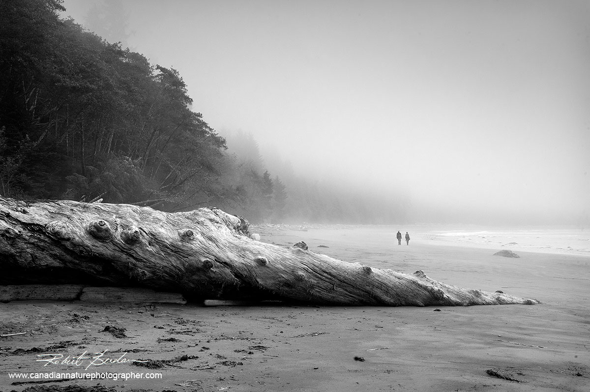 Florencia Bay, Pacific Rim National Park, Vancouver Island  black and white photo by Robert Berdan ©