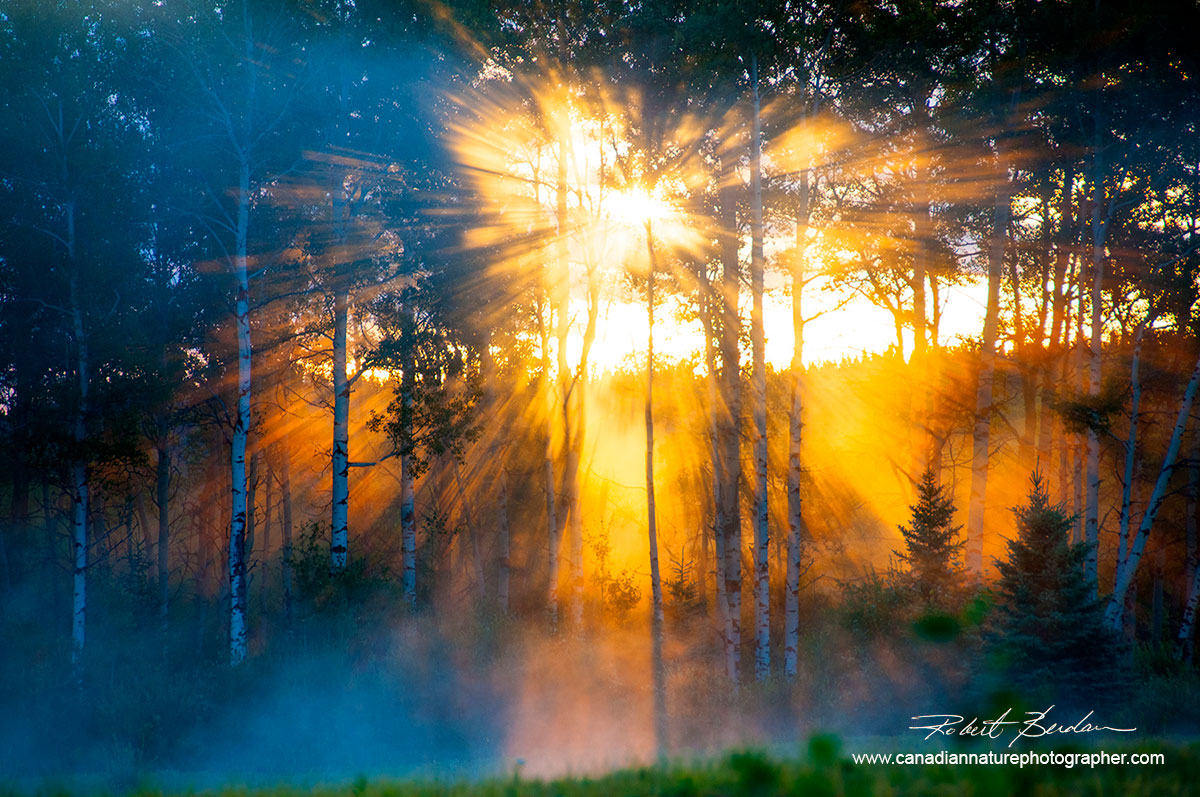 God rays of light through the forest by Robert Berdan ©