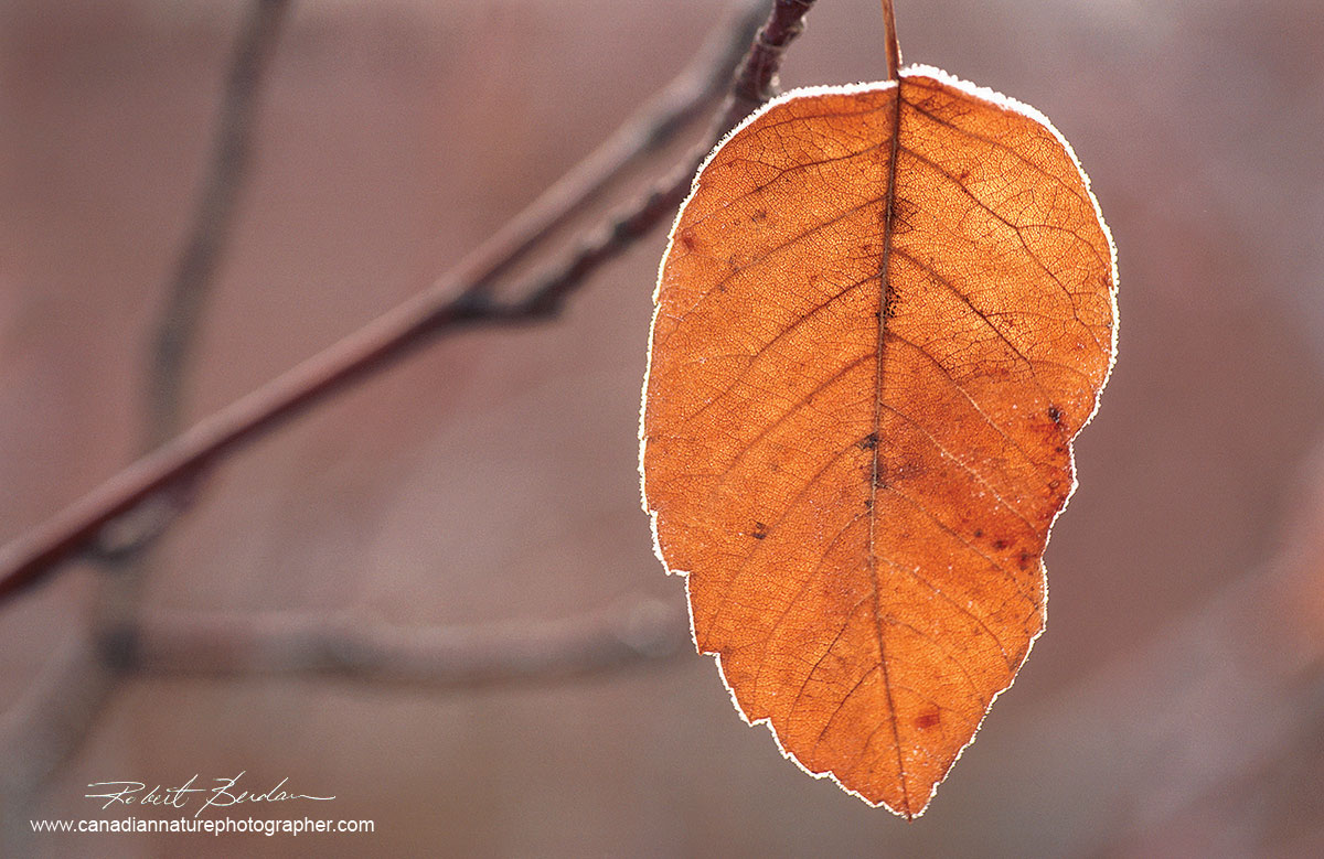 Last leaf to fall is an example of a very simple composition by Robert Berdan ©