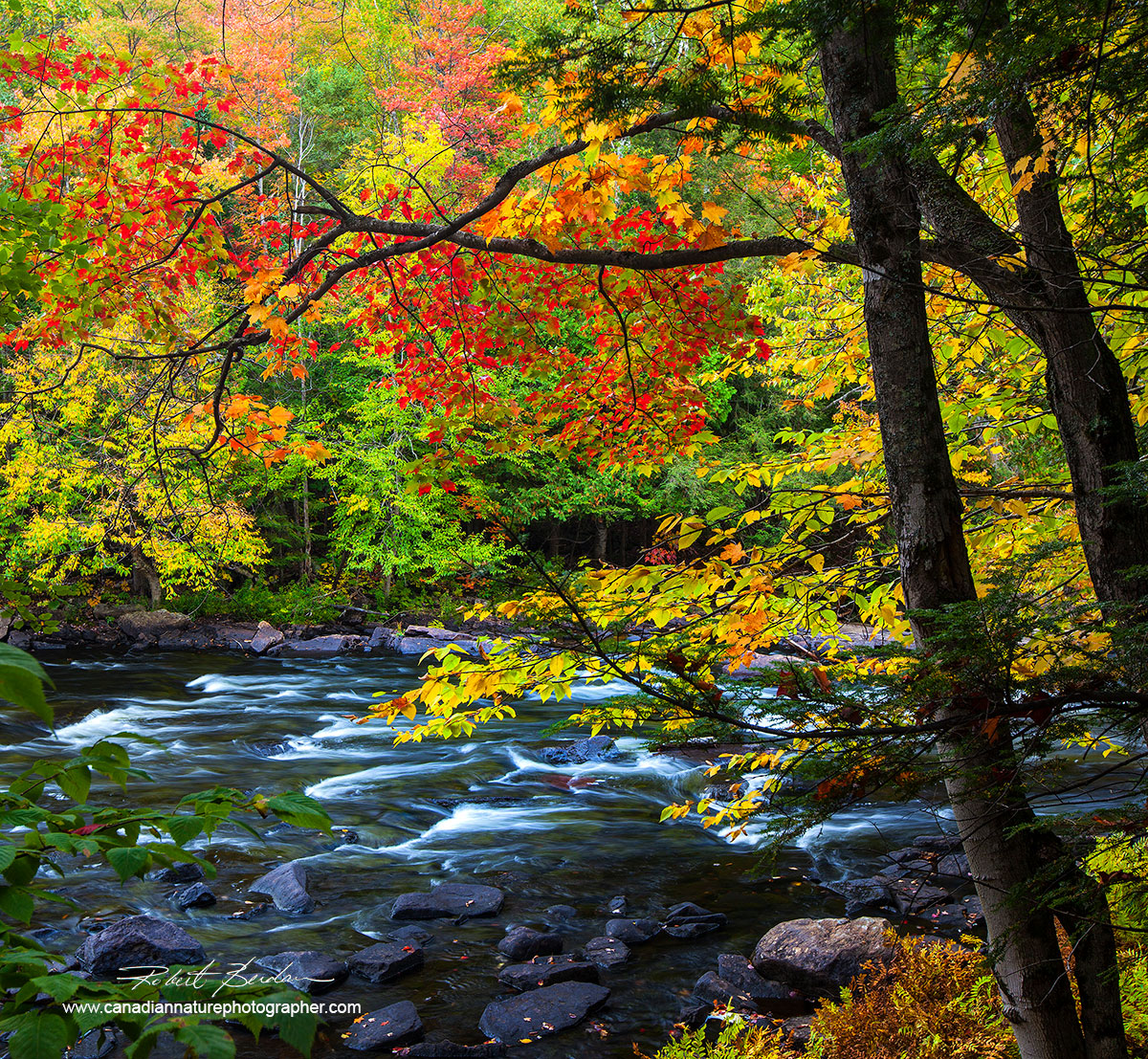 Autumn on the Oxtongue River near Algonguin Park, Ontario by Robert Berdan ©