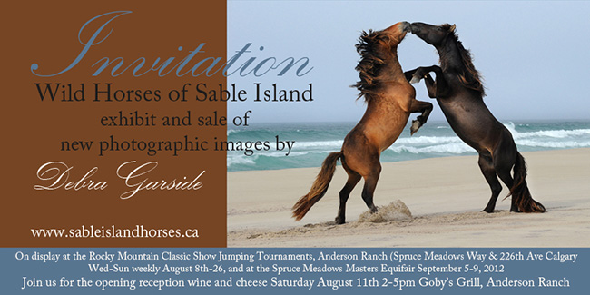 Poster Horses of Sable Island by Debra Garside