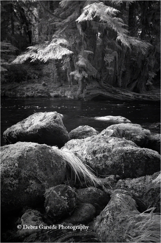 River runs throught it tempearate rainforest black and white by Debra Garside ©