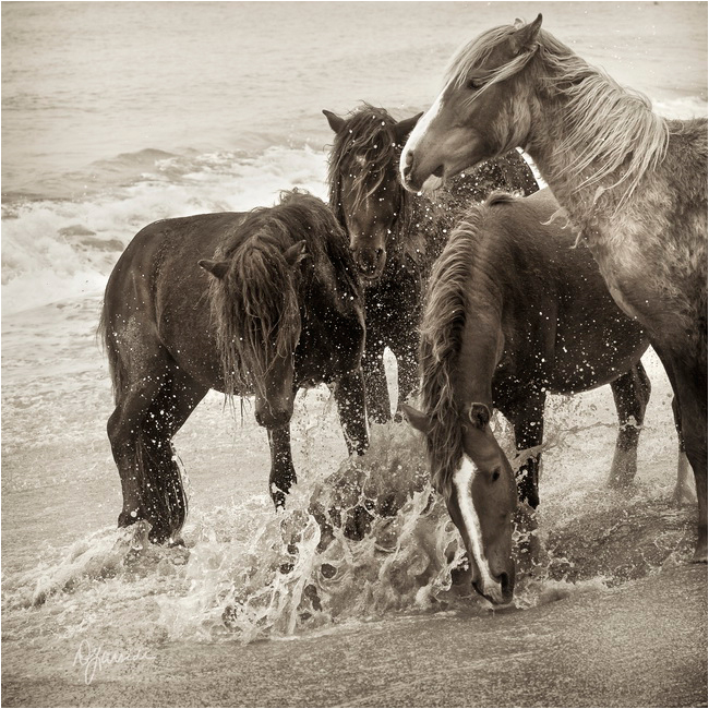 Splash horses by Deb Garside ©