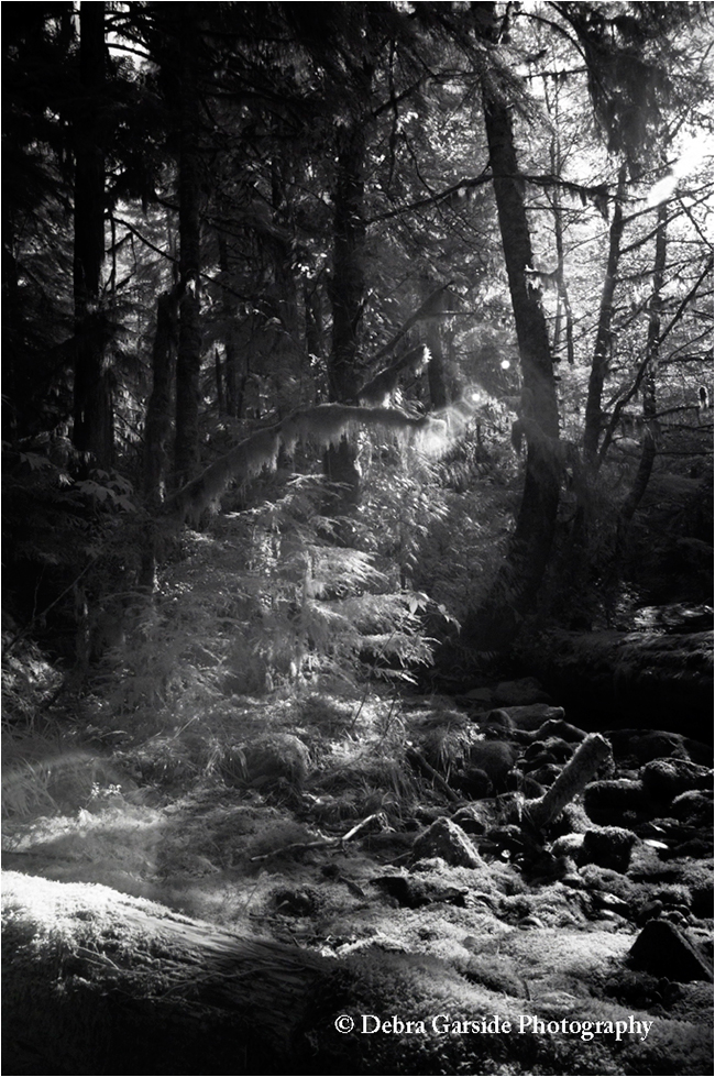 Temperate rainforest black and white by Debra Garside ©