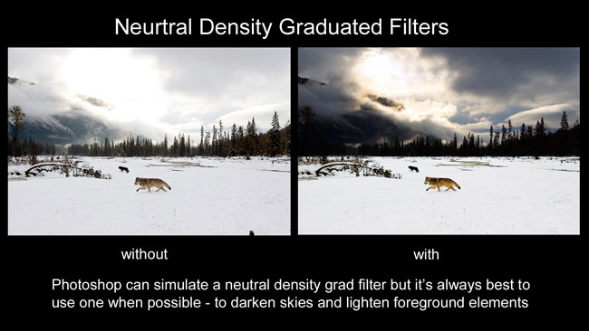 Wolves with and without grad filters by Robert Berdan