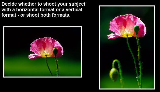 Flowers horizontal or vertical format by Robert Berdan