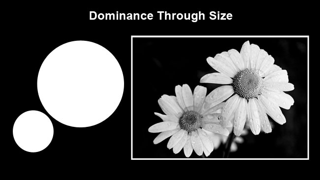 Daisys dominance by size by Robert Berdan