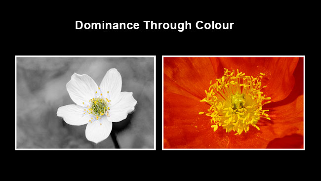Flowers dominance by colour by Robert Berdan ©