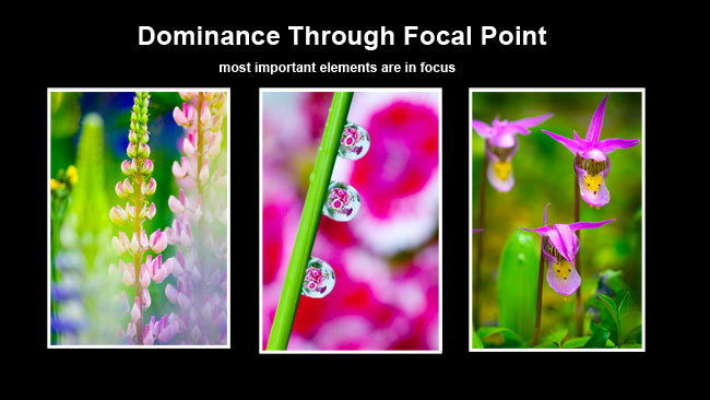 Flowers dominance via focal point by Robert Berdan ©