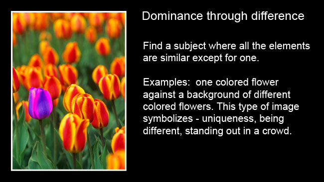 Flowers dominance by indifference by Robert Berdan