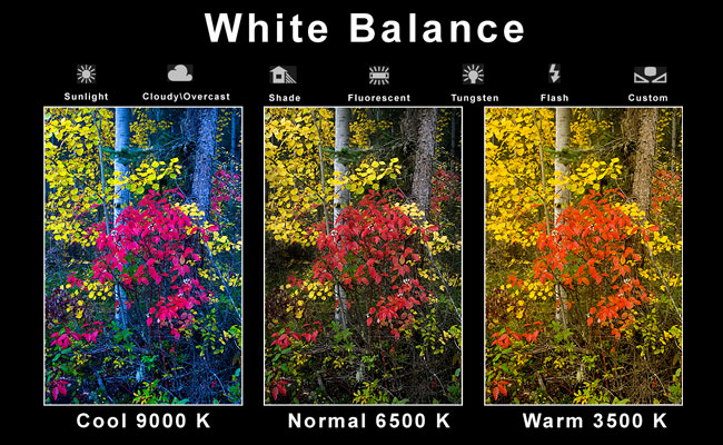 white balance by Robert Berdan ©