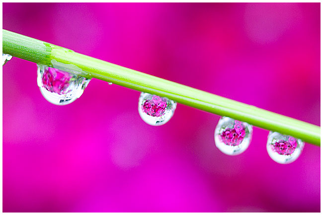 Water droplet photography by Robert Berdan ©