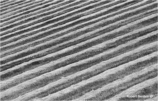 Hayfield abstract pattern in black and white by Robert Berdan ©