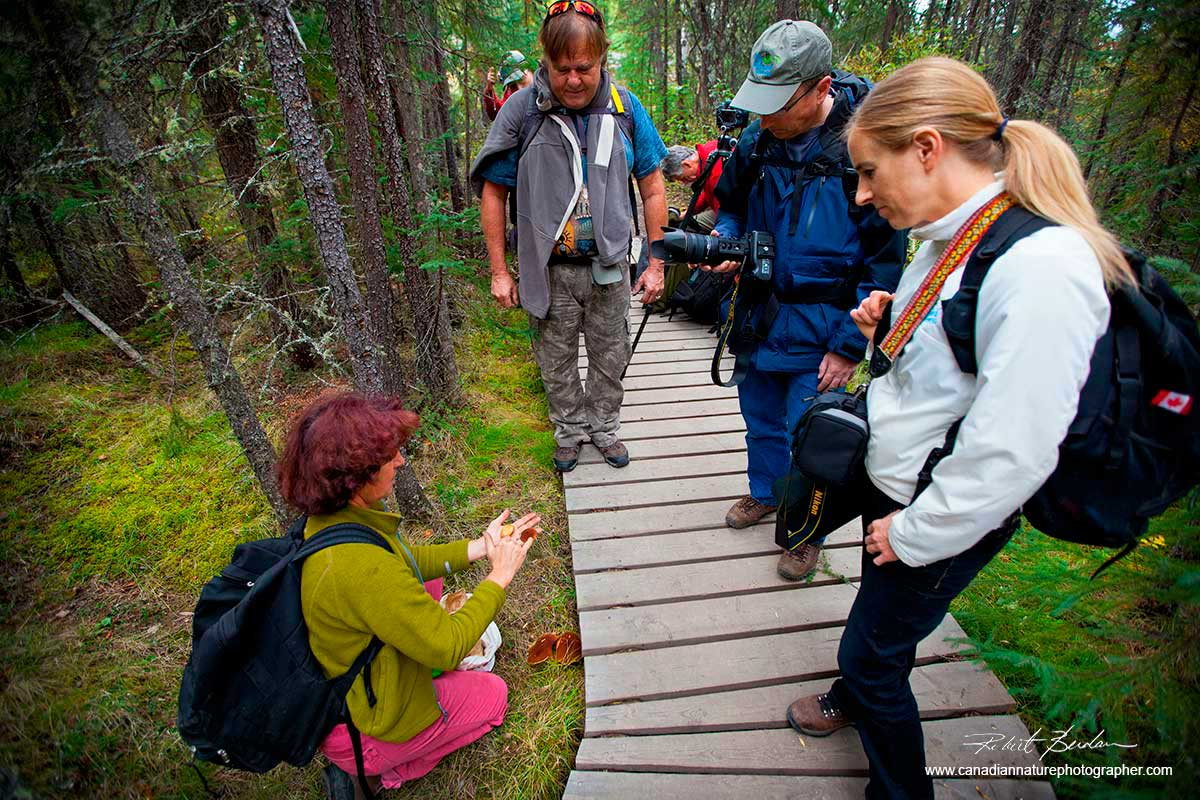 HIkers learning about edible mushrooms in the Northwest Territories by Robert Berdan ©