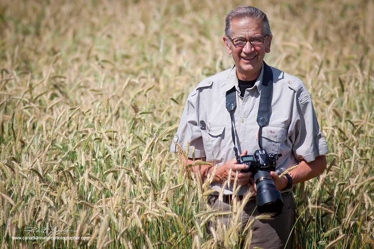 Halle Flygare in wheat field with camera by Robert Berdan ©