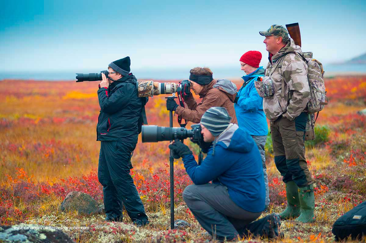 Photographers on the tundra photographing Caribou near Peterson's Point Lake Lodge  by Robert Berdan ©