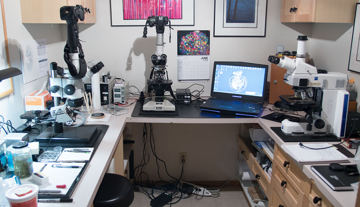Microscopy lab and work area by  Robert Berdan ©