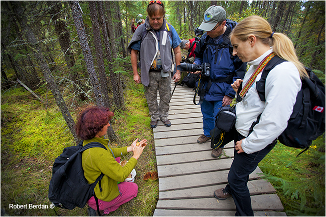 Hikers learning about mushroom identification by Robert Berdan ©